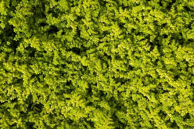 Geometrische plantenvorm