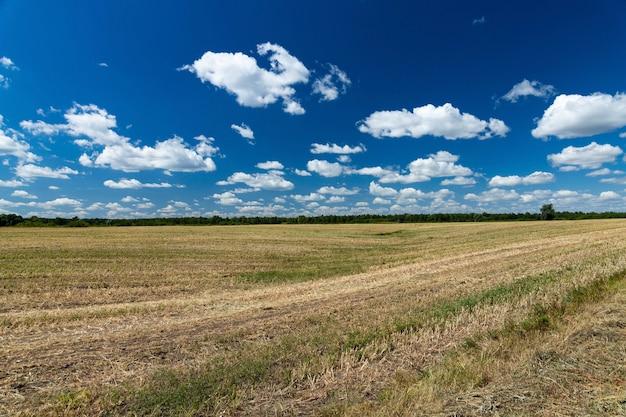 Geoogst, gemaaid landbouwtarweveld. een symbool van stabiliteit.