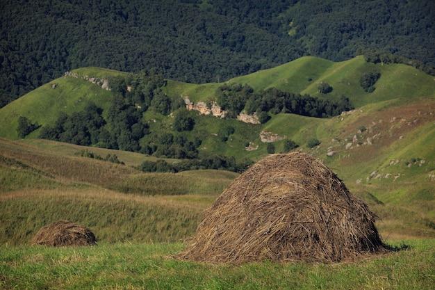 Geoogst voor de winterperiode diervoeder op een boerderij in de noord-kaukasus in rusland