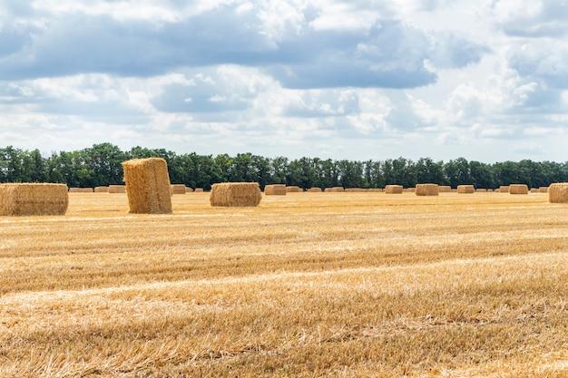 Geoogste graan granen veld, met stro hooibergen op de bewolkte blauwe hemelachtergrond.