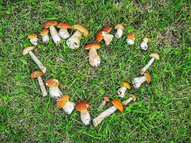 Geoogste witte bospaddenstoelen liggen op het groene gras in de vorm van een hart.
