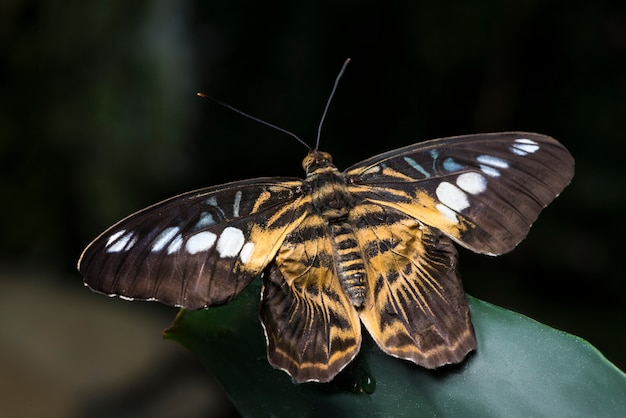 Geopende vleugelsvlinder met onscherpe achtergrond