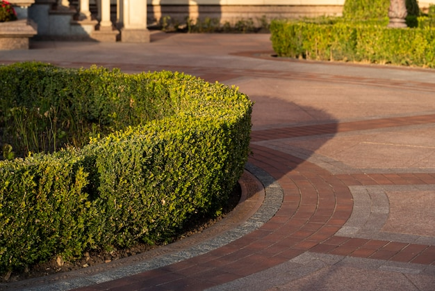Geplant en bijgesneden buxusstruiken in het park vergroening, groenblijvende heesters vaste planten