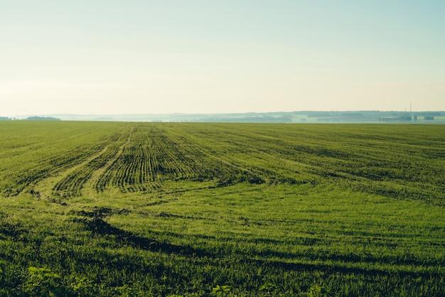 Geploegd veld in de lente met kopie ruimte.