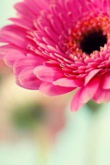 Gerbera bloemen