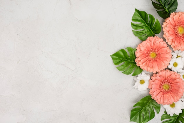 Gerbera en madeliefjebloemen met monsterabladeren