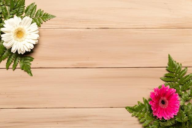 Gerberabloemen en varenbladeren