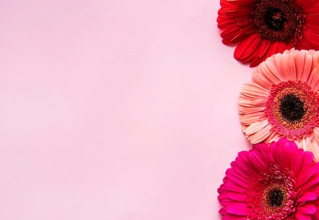 Gerberabloemen op een roze pastelkleurmuur. bovenaanzicht