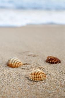 Geribbelde schelpen op zandstrand, verticaal frame