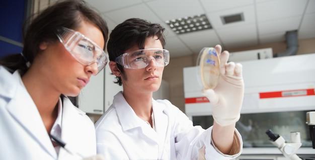 Gerichte studenten in de wetenschap kijken naar een petrischaal in een laboratorium
