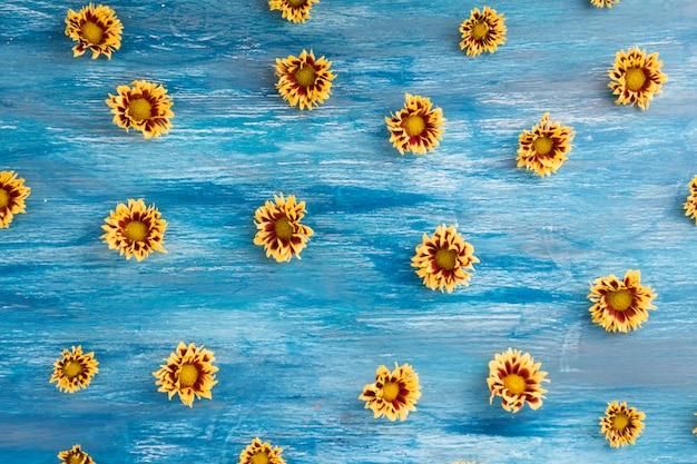 Geschilderde blauwe geweven achtergrond met gele chrysantenbloemen