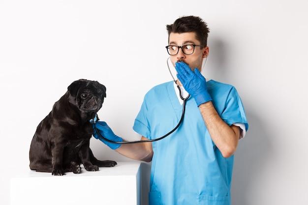 Geschokt arts in dierenartskliniek die hond met stethoscoop onderzoekt, hijgend verbaasd terwijl schattige zwarte mopshond stil op tafel zit, witte achtergrond