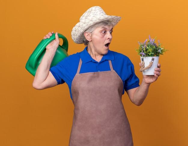 Geschokte oudere vrouwelijke tuinman met een tuinhoed die een gieter vasthoudt en naar een bloempot kijkt die op een oranje muur is geïsoleerd met kopieerruimte