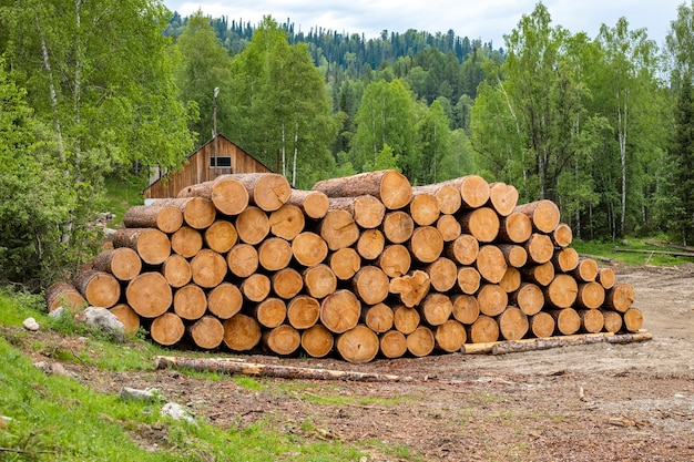 Geselecteerde bomen worden op een hoop gestapeld. reiniging van het bos in het bos. dwarsdoorsnede van de boomstam.