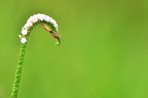 Geslachtsgemeenschap van insecten op bloemen