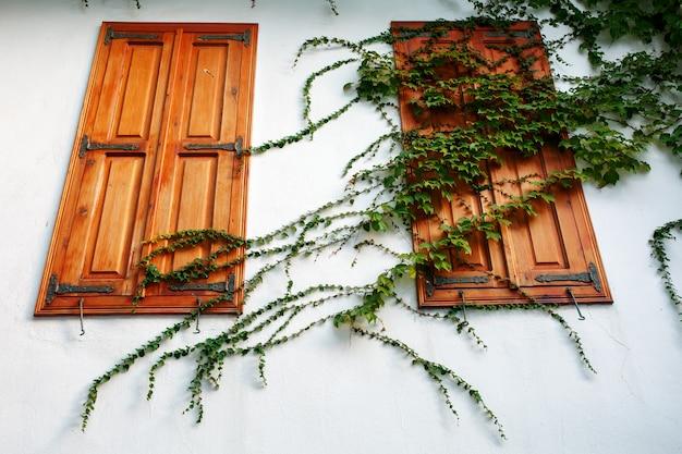 Gesloten houten luiken op een witte muur met een krullende groene plant.