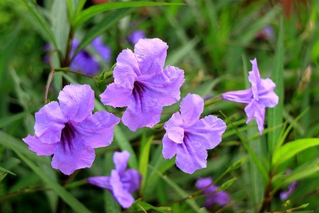 Gesloten van bos van bright purple color flowers op de green bush