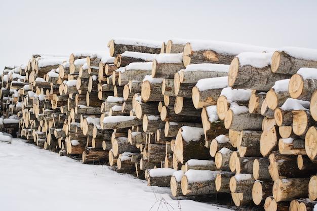 Gesneden bomen bedekt met sneeuw in de winter