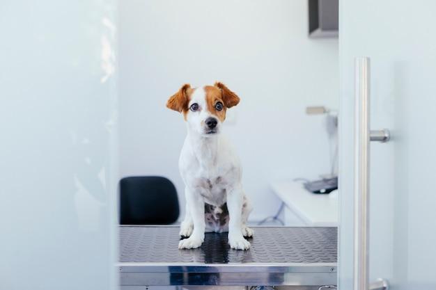 Gespecialiseerde kliniek voor huisdieren