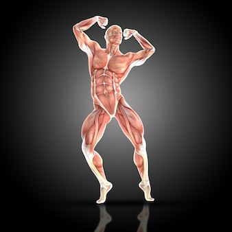 Gespierde man die met zijn spieren