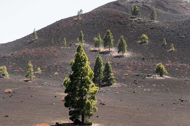 Gespreide bomen op vulkanisch reliëf