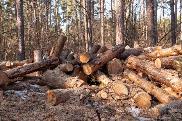 Gestapeld brandhout in een stapel in openlucht close-up.