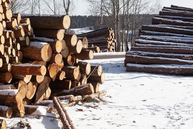 Gestapelde dennen, vuren boom logt in winter bosgebied. bosbeheerfase ontbossing.