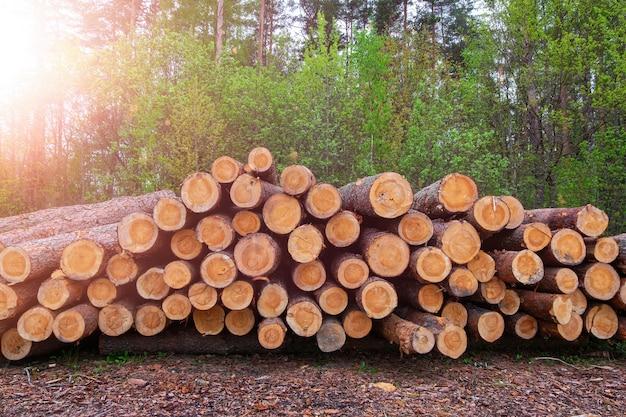 Gestapelde dennenbomen log stammen, de houtkap hout houtindustrie.