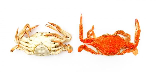 Gestoomde krabben op een witte achtergrond.