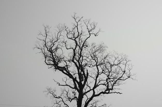 Gestorven boom en takken met witte achtergrond