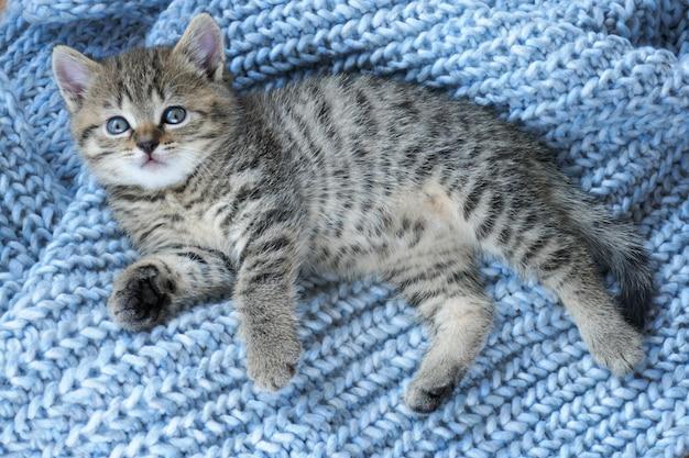 Gestreept schots klein katje op een blauwe wollen gebreide