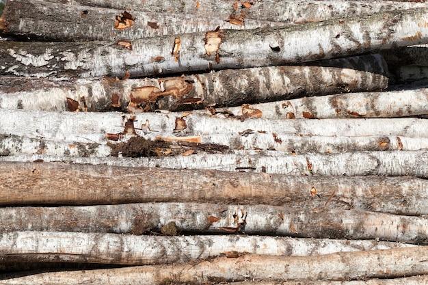 Gestreepte berkenstammen tijdens het oogsten voor de bouw