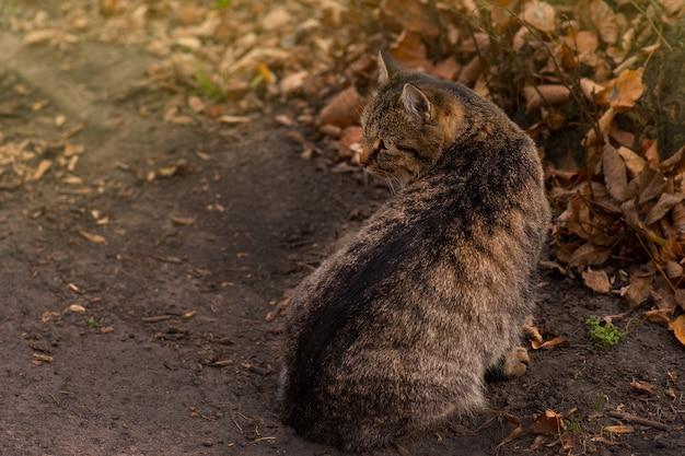 Gestreepte cyperse kat liggend op de bladeren in de herfst. gestreepte cyperse kat in de herfst in rood oranjegele herfstbladeren.