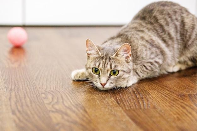 Gestreepte kat die op de vloer in de ruimte ligt.