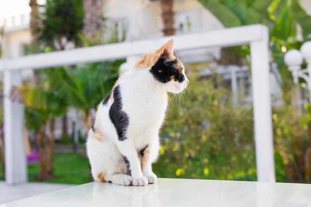Gestreepte kat op straat