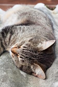 Gestreepte katkat die op een leidak en het rusten liggen