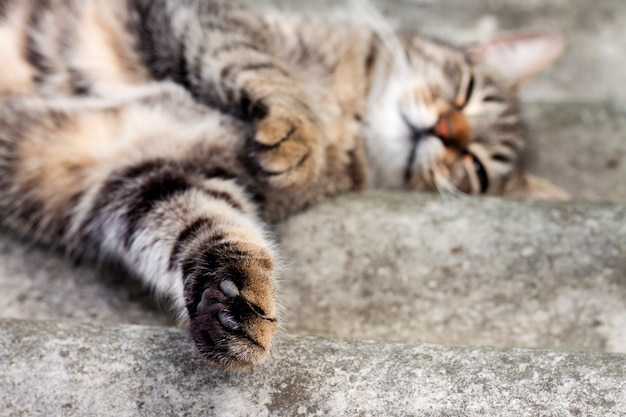 Gestreepte katkat die op een leidak liggen en met poot rusten