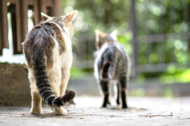 Gestreepte katten die langs de straat lopen