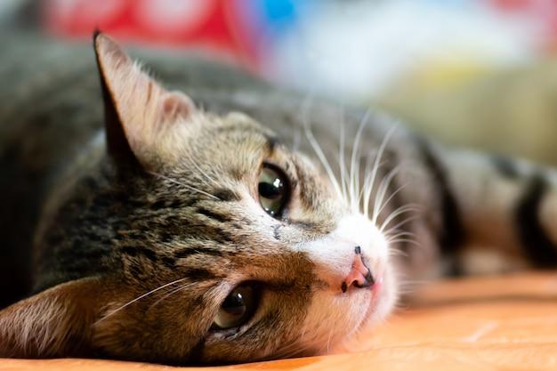 Gestreepte kattenslaap op bed.