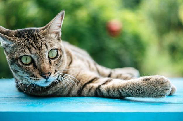 Gestreepte kattenslaap op een blauwe cementvloer