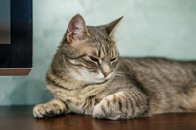 Gestreepte mooie kat die en in de ruimte liggen slapen.