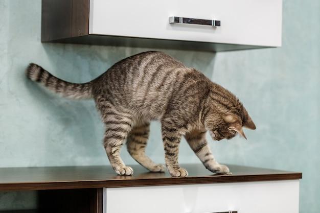 Gestreepte mooie kat die in de ruimte speelt.