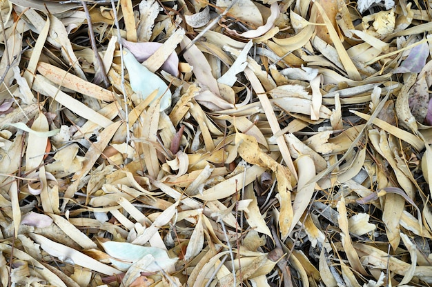 Gestructureerde achtergrond van hoop droge verdorde gevallen herfstbladeren van eucalyptusbomen
