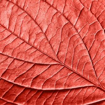 Getextureerde natuurlijke bladpatroon achtergrond voor lay-out in een kleur van het jaar living coral. modieuze trendy kleur. macro foto. plat leggen