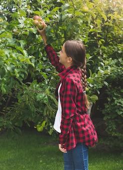 Getinte afbeelding van een mooi tienermeisje dat appels plukt in de tuin