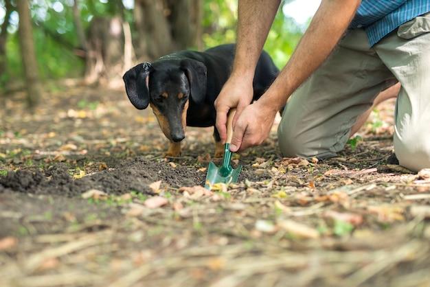 Getrainde hond die zijn baasje laat zien waar hij in het bos naar truffelpaddestoelen moet graven.