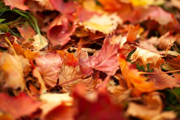 Gevallen droge gele bladeren die op het gazon liggen