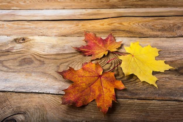 Gevallen esdoornbladeren op houten lijstachtergrond