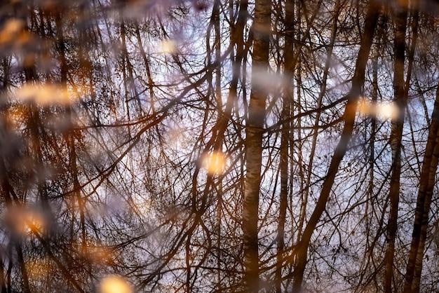 Gevallen geel blad drijft in plas. bomen weerspiegeld op het oppervlak van de plas water. herfstlandschap meervoudige belichting