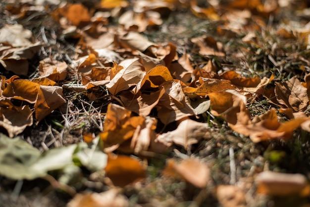 Gevallen gele en oranje de herfstbladeren op groen gras ter plaatse.